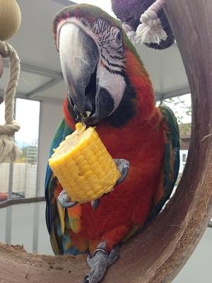 Gemüse für Papageien